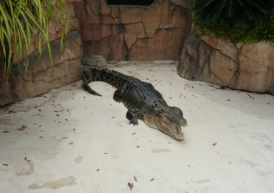 swimming with crocodiles, darwin, crocosaurus cove, bucket list